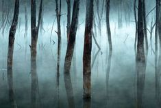 «Κρύο και ομίχλη», τιμητική διάκριση, Τοπία. Πρωινή ομίχλη πέφτει πάνω στα νεκρά δέντρα της λίμνης Cuejdel στη Ρουμανία, μια φυσική λίμνη που έχει δημιουργηθεί από κατολισθήσεις