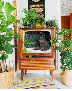"""Flea Market Decor on Instagram: """"With a blanket and floral paper, this retro tv was upcycled into a kitty haven! Photo by @vintageinteriorxx  #fleamarketdecormagazine…"""""""