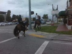 Sweet Home Hialeah: Crazy-People Miami Dade County, Crazy People, Cuban, Sweet Home, Horses, House Beautiful, Horse