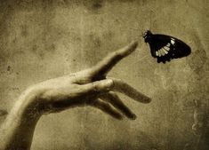 Photographer Masao Yamamoto   /   Thank you for reminding me what butterflies feel like.   /