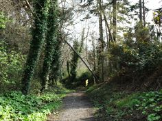 shankill Dublin, Country Roads, Plants, Plant, Planets