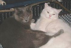 My cats Isaac & Mushy Bear. Marty, New York City, NY. 8/10/12.