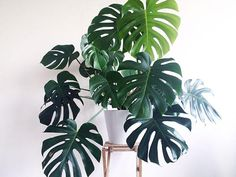 8 Awesome Reasons Why You Should Have More Houseplants - homeyou