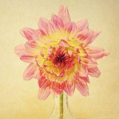 dahlia photo valentine minimalist pink blush by SeptemberWren, $14.00