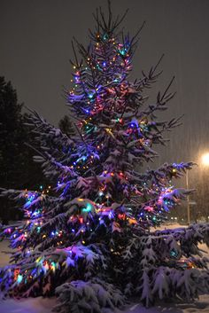 lighting the trees comes from pagan traditions, symbolizing the solstice bringing light to the darkness of winter