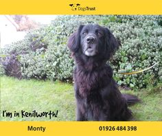 Monty is a sensitive lad from Kenilworth who takes his time to get to know new people. He does love his food and treats which could be used as part of his on going training. Dogs For Adoption Uk, Do Love, Love Him, Dogs Trust, Close To My Heart, Shelter, Charity, Training, Homes