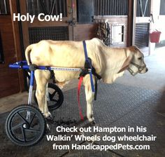 1000 images about animals in wheelchairs on pinterest