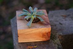 wooden pot and the succulents