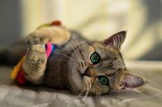 Look at those marvelous eyes ♥