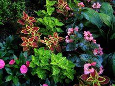 Deavita vous propose un article, consacré aux plantes d'ombre avec photos fascinantes! Contemplez minutieusement la galerie de photos et empruntez ensuite l