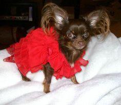 essay dog pet animal
