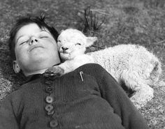 A newly-born lamb snuggles up to a boy, by Williams Fox. England, 1940.