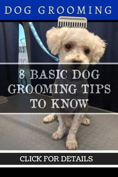 Dog Grooming Tips: Important Things to Consider Before Grooming Your Dog Dog Grooming Tips, Dog Grooming Supplies, Dog Grooming Business, What Dogs, Take Care Of Yourself, Your Dog, Puppies, Pets, Animals
