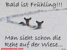 Translation: Spring is soon! you can already see the deers on the meadow! Translation: Spring is soon! you can already see the deers on the meadow! Bremen Germany, German Quotes, Internet, Good Morning Wishes, Pissed Off, Just Smile, Picture Design, True Words, Morning Quotes