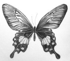 35+ Butterfly Drawing Ideas