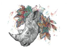 272 best rhino art