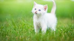 Download Wallpaper ID 2265031 - Desktop Nexus Animals