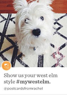 Pet-Friendly Interior Style Photos Cute Pets + West Elm = The Perfect Com. Westies, Westie Dog, Cute Puppies, Dogs And Puppies, Doggies, West Highland Terrier, White Terrier, White Dogs, Little Dogs
