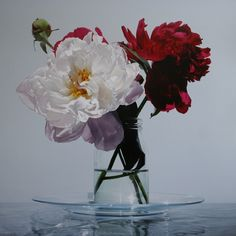 Glen Semple- A Little Plate of Peonies flowers | vase | bouquet | spring florals