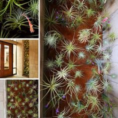 air plants, they are so easy to take care of.