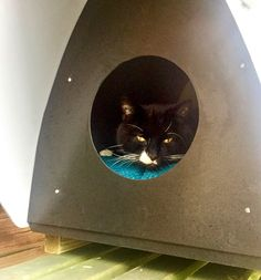 Frankie stray cat in his CatChalet (R) shelter #cats