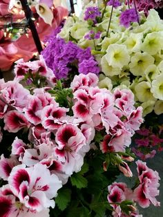 Our mothers day hanging baskets #baskets #stillingsandembry #florists #flowers #hanging