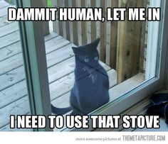 This is so my cat Lily... Within 5 minutes of being outside, she brings something inside :-/