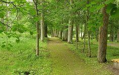 Latvia, Forest, Trees, Woods, Park