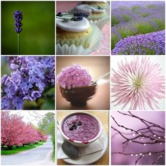 Lots of wonderful Lavender recipes on this website.  Merlin's Magickal Mistress: Lavender time!!!!!!