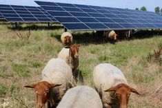 agricole solaire