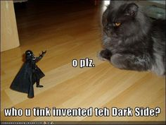 basement cat invented the dark side Silly Cats, Cats And Kittens, Cute Cats, Funny Cats, Funny Animal Memes, Funny Animals, Cute Animals, Funny Quotes, Crazy Cat Lady