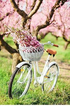 Bicycle and spring flowers