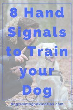 8 Hand Signals to Train your Dog   Dog Obedience Training   Dog Training Tips   Dog Training Commands via @KaufmannsPuppy