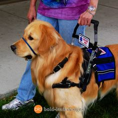 Mobility Support Harness
