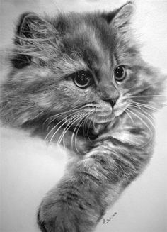 This is a pencil drawing.  Incredible Cat Pencil Sketches by Paul Lung. The beautiful pencil art was created by Hong Kong based graphic artist from Paul Lung.  He doesn't use eraser and spends up to 60 hours sketching out his pictures. As he often admits people do not believe him and he has to make videos of his work to prove that these art works are not photographs.