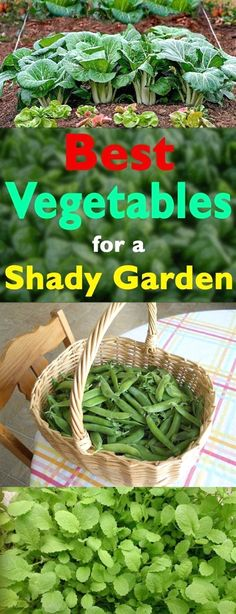 Growing edibles in a shady space of your garden is possible, see the best vegetables you can grow in a shady garden.  #OrganicGardeningTips