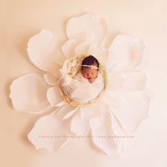 irvine newborn photographer #newbornphotographer #newbornphotography…