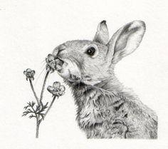 Gillian McMurray-Rabbit in graphite.