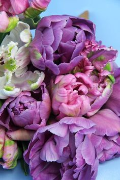 Parrot tulips. Purple. White. Pink.
