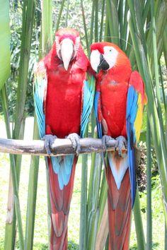 My Macaw Heaven -  Bali 2012