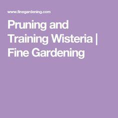 Pruning and Training Wisteria   Fine Gardening