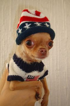 11 Dogs That Prove Small Is Powerful – 1. #Chihuahuas http://www.pindoggy.com/pin/9476/