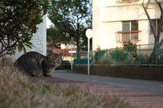 猫|ネコ|ねこの日々 | じぇいなすと、うちニャンズ+外猫いっぱい | ページ 6