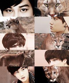 EXO as animals→ Kai as a puma