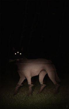 #artistsontumblr #cryptid #canine #witchcraft #void #blackshuck #dog #grim #night #cursed #jennabarton  - www.thepaganwitch.com