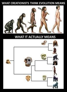 "via Trust me, I'm a ""Biologist"""