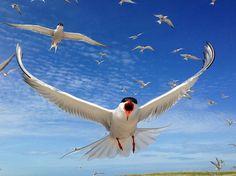 https://www.audubon.org/magazine/may-june-2015/2015-audubon-photography-awards-top-100