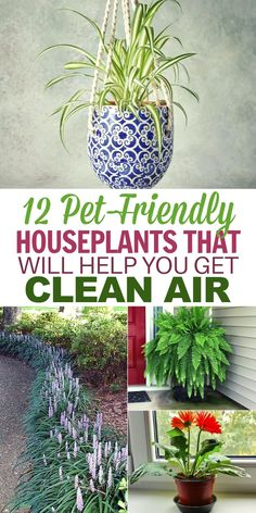 12 Common House Plants That Filter Your Air All Day 2019 These air cleaning house plants are the perfect way to freshen up your home this summer! The post 12 Common House Plants That Filter Your Air All Day 2019 appeared first on Backyard Diy.