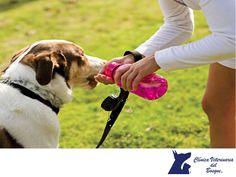 CLÍNICA VETERINARIA DEL BOSQUE. Durante los meses de verano no solo nosotros sentimos la intensidad del calor, nuestras mascotas también son sensibles a este cambio. Los perros braquicéfalos como el bulldog inglés, el pug, el bóxer, el shih tzu o el pekinés, son mucho más propensos a sufrir golpes de calor debido a que sus orificios nasales son más pequeños y presentan dificultades para respirar. Te recomendamos evitar los paseos en horas calurosas del día en el verano y NUNCA dejarlos en el