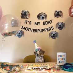 The Effective Pictures We Offer You About Cat birthday party ideas center pieces A quality picture can tell you many things. You can find the most beautiful pictures that can be presented to you about Dog First Birthday, Puppy Birthday Parties, Happy Birthday, Puppy Party, Cat Birthday, Cat Party, Crazy Cat Lady, Gotcha Day, Its My Bday